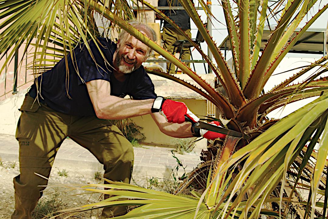 Palmi ilukuur